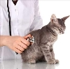 Ветеринарные клиники в Боковской